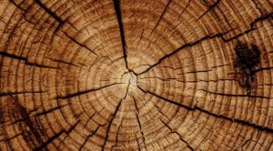 Aerial view of tree stump showing rings of old wood